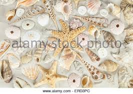 assorted seashells assorted seashells stock photo royalty free image 29209748 alamy
