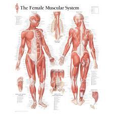 anatomy abbreviations list images learn human anatomy image
