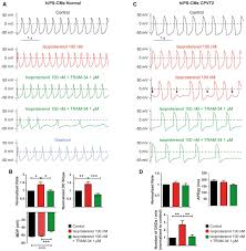 sk4 k channels are therapeutic targets for the treatment of