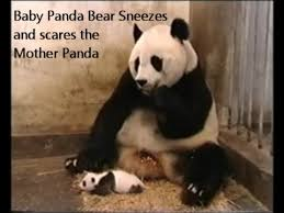 Panda Mascara Meme - 20 best panda memes images on pinterest funny pics funny stuff