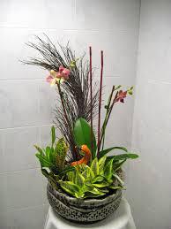 pdi plants blog flowering rotational living arrangements