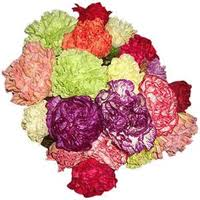 Carnations In Bulk The Grand Rapids Area Best Bulk And Wholesale Flowers U0026 Best