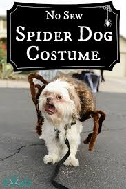 Funny Halloween Costumes Dogs 20 Spider Costume Dogs Ideas Dog Spider