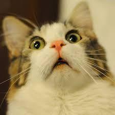 Scared Cat Meme - scared cat blank template imgflip
