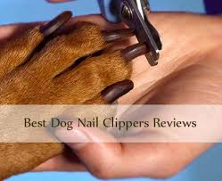 5 best dog nail clippers reviews u0026 professional clippers buying guide