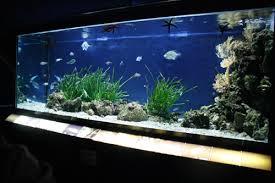 vasche acquario bloginfo name acquario aperto dal 3 marzo 2017 acquario