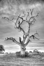 lightning tree royalty free stock photography image 26201167