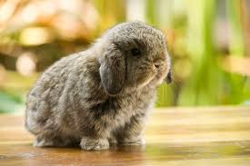 the world of rabbit 12 of the cutest smallest breeds of rabbits in the world