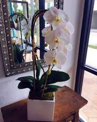 orchid delivery tropical flower orchid specialist palm florida palm