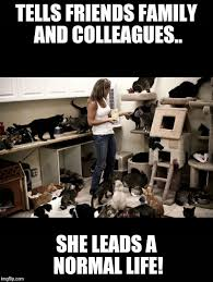 Crazy Cat Lady Memes - crazy cat lady imgflip