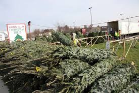 lions tree lot will open black friday the edwardsville