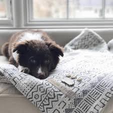 Dog Sofa Blanket Blanket Black Tribal