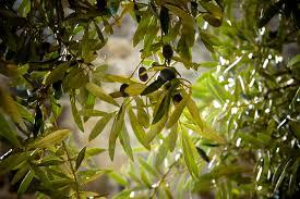 free images landscape nature branch blossom fruit leaf