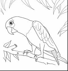 tweety bird coloring pages fabulous cardinal bird coloring page printable with bird coloring