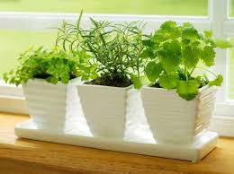 kitchen herb garden ideas how to plant a kitchen herb garden hgtv