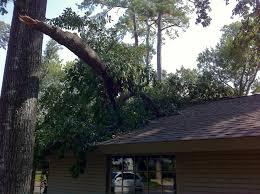 don s tree service