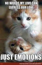 Memes For Lovers - cat lovers by derpbot007 meme center