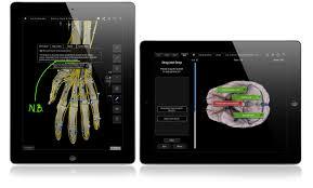 Anatomy And Physiology Online Quizzes Brain U0026 Nervous Pro U2013 3d4medical