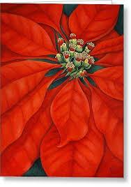Pointsettia 290 Best Poinsettia U0027s Images On Pinterest Christmas Art Flowers