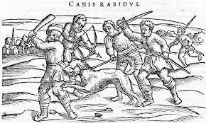 rabies in animals wikipedia
