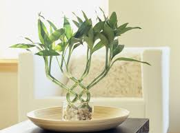 Best Low Light Indoor Plants by Decorating Bedroom With Plants Air Purifying Indoor Names That