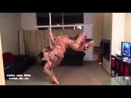 Pole Dancing Memes - t rex pole dance youtube