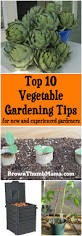 top 10 vegetable gardening tips for new u0026 experienced gardeners