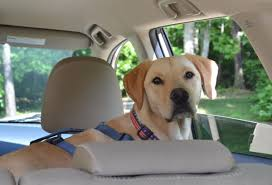 Washington traveling with pets images Pet travel tips for the car jpg