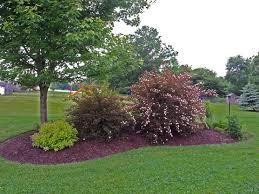 island berm planting using natives garden decor pinterest