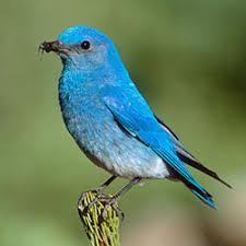 California Backyard Birds by Attracting And Feeding Birds In California