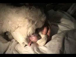 sims 3 boxer dog amazing dog birth cute dog youtube