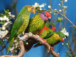 colourful birds wallpaper beautiful birds wallpaper birds of a
