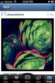 divas and dorks november 2015 divas and dorks take photos like instagram check out these
