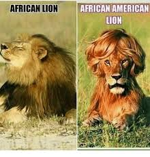 Lion Meme - african lion african american lion meme on me me