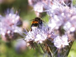 attract beneficial bees to your garden hgtv