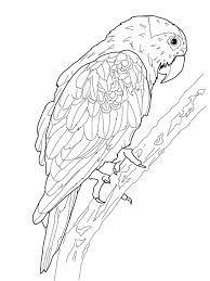 106 parrot coloring pages images drawings