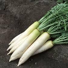 100 pcs sale white fruits radish seeds organic vegetable