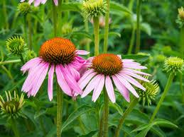 flowers in garden images pink flowers in garden u2013 mmt