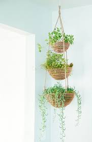 hanging plants indoors modern interior design with ceiling