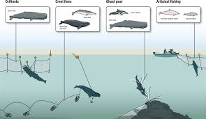 how fishing is endangering whales dolphins and porpoises wdc