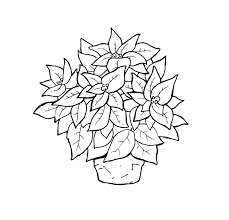 poinsettia coloring page christmas flower in in a pot coloring