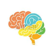 Image Of Brain Anatomy Human Brain Anatomy Structure Human Brain Anatomy Illustration