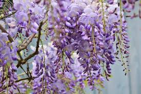 Tree With Purple Flowers Top 10 Most Pleasant Smelling Flowers The Mysterious World