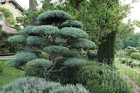 Topiary Cloud Trees - index of fa wp content uploads 2013 12