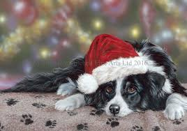 border collie dog christmas cards c393x waiting for santa