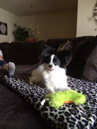 dog the bounty hunter star beth chapman undergoes serious cancer