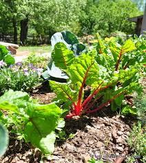 best and easiest veggies to grow in oklahoma gardening stuff