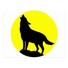 belgian shepherd howling wolf howling moon postcards zazzle