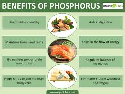What Vitamin Is Good For Hair Loss 10 Amazing Benefits Of Phosphorus Organic Facts
