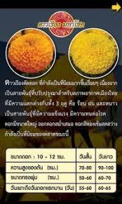 appli cuisine android soemsak com เช ยงใหม สอนเข ยน โปรแกรม app ม อถ อ iphone ios